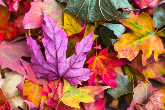 Fall+Equinox+Meaning+-+Spiritual+Significance+of+Autumn+Equinox